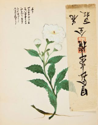 White flower with additional rice paper strip.