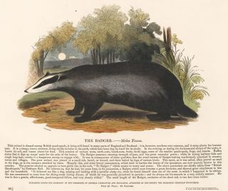 The Badger. Plates Illustrative of Natural History. Josiah Wood Whymper