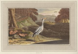 Heron. Interesting Selections from Animated Nature. William Daniell