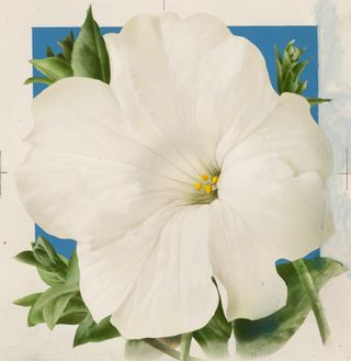 White Moonflower. American School