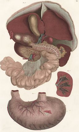 Liver, pancreas, spleen and stomach. Anatomical Plates of the Human Body. John Lizars