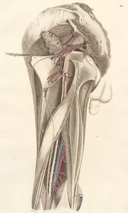 Pelvis dorsum - blood vessels and nerves. Anatomical Plates of the Human Body. John Lizars