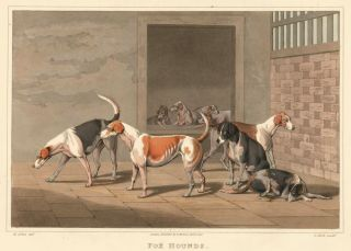 Fox Hounds. Henry Alken