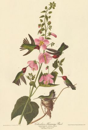 Columbian Humming Bird. John James Audubon
