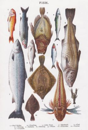 Fish. Mrs. Beeton's Book of Household Management. Isabella Beeton