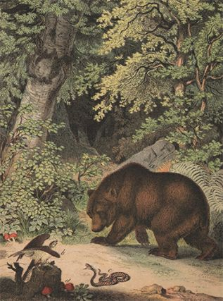 Brown Bear. The Instructive Picture Book. Adam White, M H. H. J