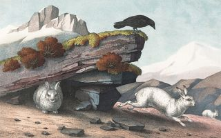Alpine Hare. The Instructive Picture Book.