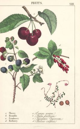 Cherry, Bramble, Cranberry and Barberry. Instructive Picture Book. Robert Stark