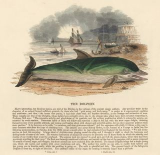 The Dolphin. Plates Illustrative of Natural History. Josiah Wood Whymper