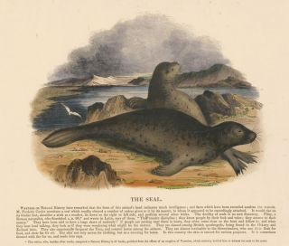 The Seal. Plates Illustrative of Natural History. Josiah Wood Whymper