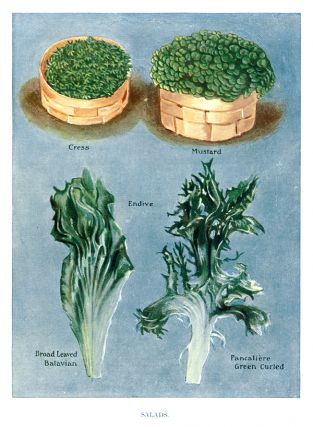 Salads. The Vegetable Grower's Guide. John Wright