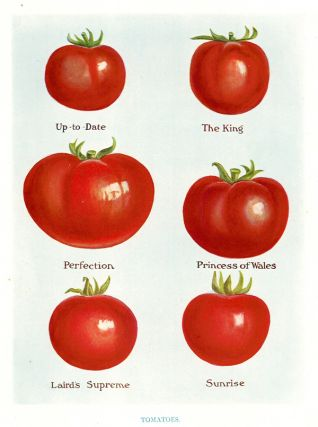 Tomatoes. The Vegetable Grower's Guide. John Wright
