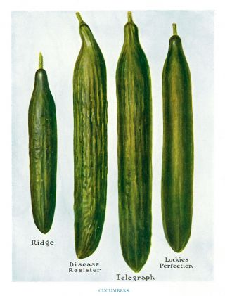 Cucumbers. The Vegetable Grower's Guide. John Wright