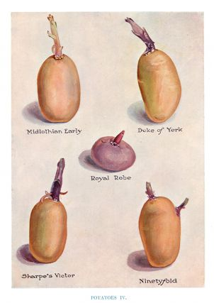 Potatoes IV. The Vegetable Grower's Guide. John Wright