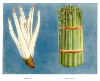 Seakale and Asparagus. The Vegetable Grower's Guide. John Wright