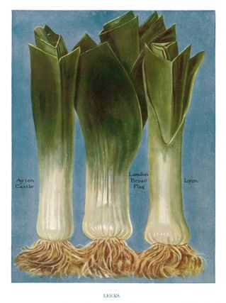 Leeks. The Vegetable Grower's Guide. John Wright