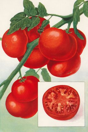 Tomatoes. The Grocer's Encyclopedia. Artemas Ward