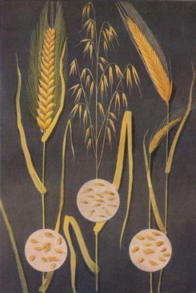 Wheat, Oats and Rye. The Grocer's Encyclopedia. Artemas Ward