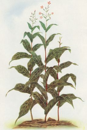 Tobacco. The Grocer's Encyclopedia. Artemas Ward