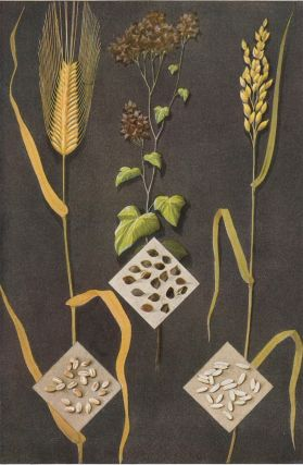 Barley, Buckwheat and Rice. The Grocer's Encyclopedia. Artemas Ward