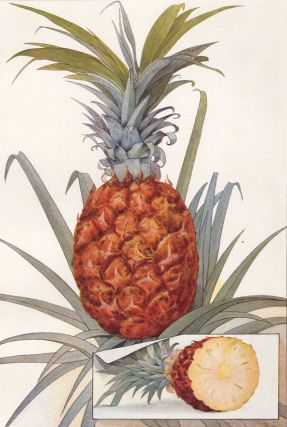Pineapple. The Grocer's Encyclopedia. Artemas Ward