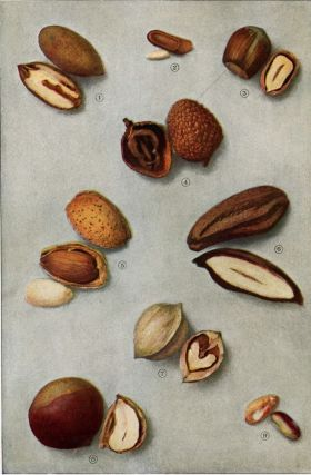 Nuts. The Grocer's Encyclopedia. Artemas Ward