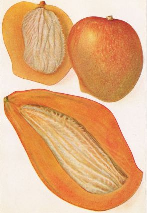 Two Types of Mangoes. The Grocer's Encyclopedia. Artemas Ward