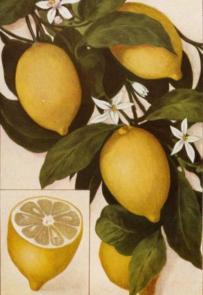 Lemons. The Grocer's Encyclopedia. Artemas Ward