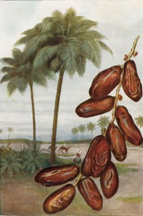 Dates. The Grocer's Encyclopedia. Artemas Ward