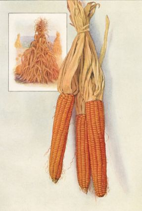Corn. The Grocer's Encyclopedia. Artemas Ward.