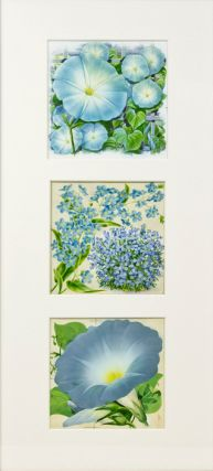 Moonflower Vine, Forget-Me-Not, Morning Glory (Heavenly Blue