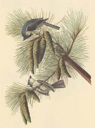 Crested Titmouse. John James Audubon
