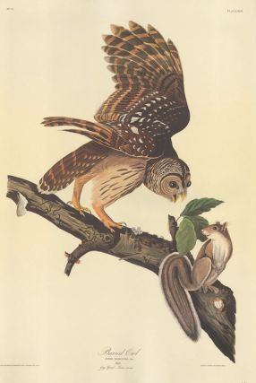 Barred Owl. John James Audubon