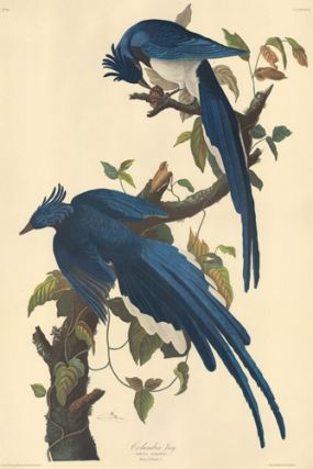 Columbia Jay. John James Audubon