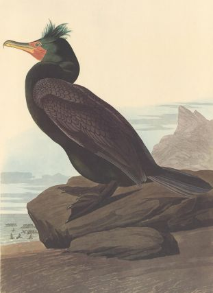 Double-breasted Cormorant. John James Audubon