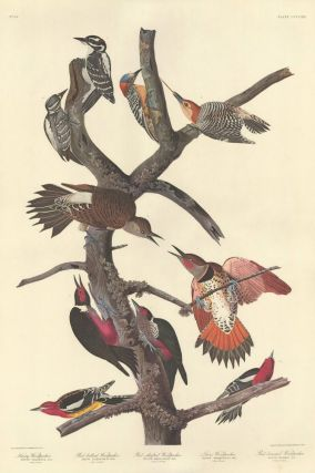 Ten Woodpeckers. John James Audubon