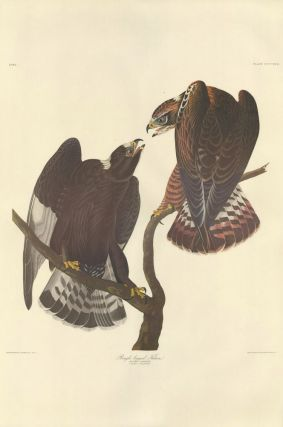 Rough-legged Falcon. John James Audubon