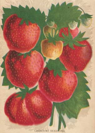 Crescent Seedling Strawberry. American School