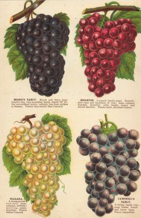 Grape Varieties. American School