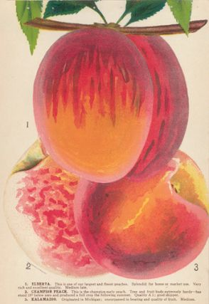 Peach Varieties. American School
