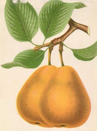 Lawrence Pear. American School