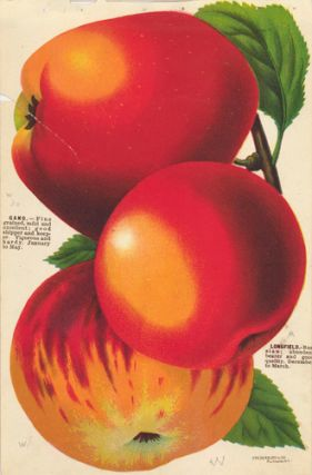 Apple Varieties. American School