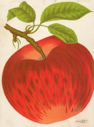 Ben Davis Apple. American School