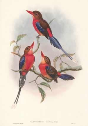 Tanysiptera Danae. The Birds of New Guinea and the Adjacent Papuan Islands. John Gould, Richard...