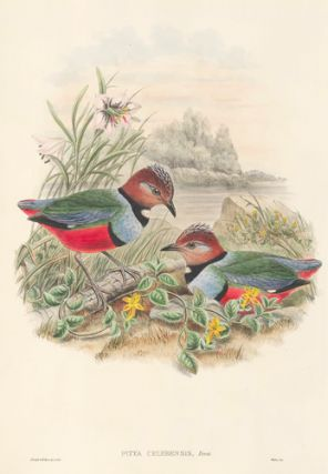 Pitta Celebensis. The Birds of New Guinea and the Adjacent Papuan Islands. John Gould, Richard...