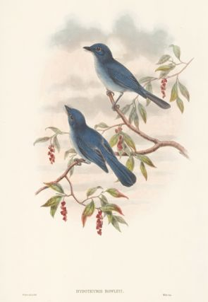 Hypothymis Rowleyi. The Birds of New Guinea and the Adjacent Papuan Islands. John Gould, Richard...