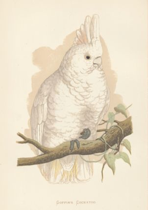Goffin's Cockatoo. Parrots in Captivity. William Thomas Greene