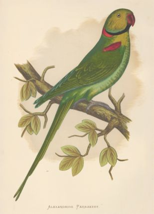 Alexandrine Parrakeet. Parrots in Captivity. William Thomas Greene
