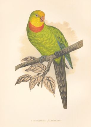 Barraband's Parrakeet. Parrots in Captivity.