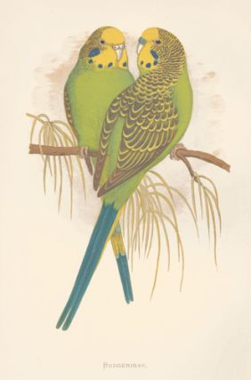 Budgerigar. Parrots in Captivity. William Thomas Greene